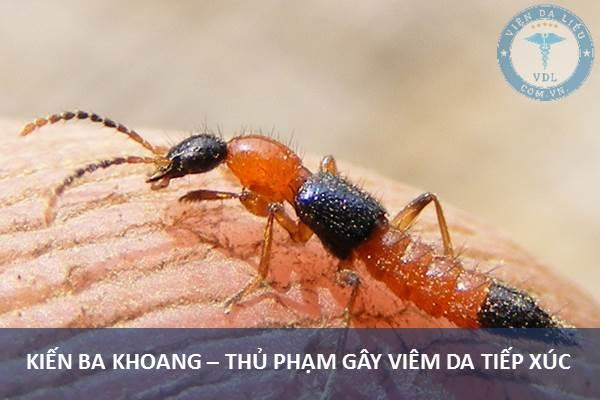 I. Nguyên nhân gây viêm da tiếp xúc do côn trùng 1